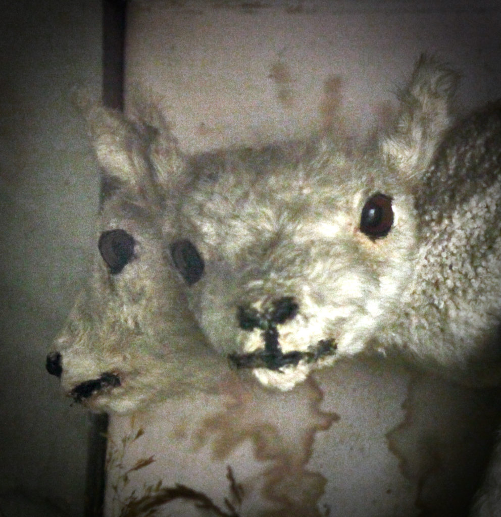 Restoration Project:  The two-headed lamb update #2