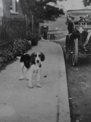 Spokesman, the dog